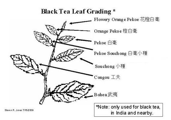 black-tea-grading.jpg