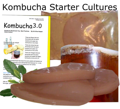 kombucha-starter-cultures.jpg