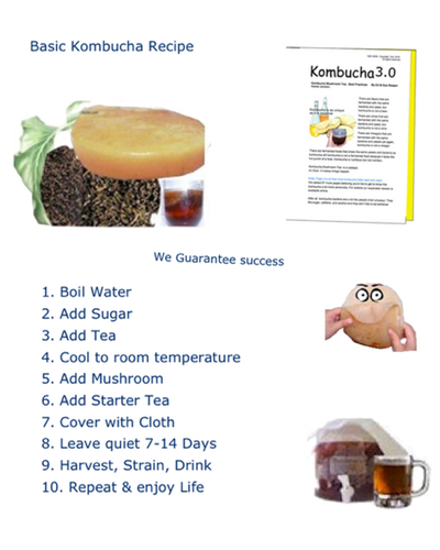 simple-kombucha-recipe-.jpg